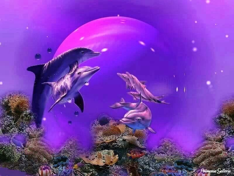 Pin By Atalanta Vlinder On Fish S And Ocen Life Dolphins Animal Dolphins Animals