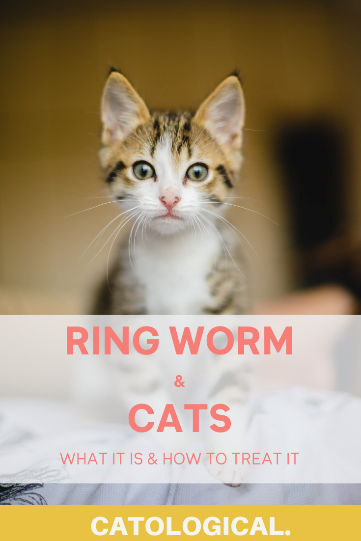 Looking To Treat And Understand Ringworms In Cats Read This Blog For A Overview About How This Parasite Could Be Af In 2020 Ringworm In Cats Cat Diseases Cat Ailments