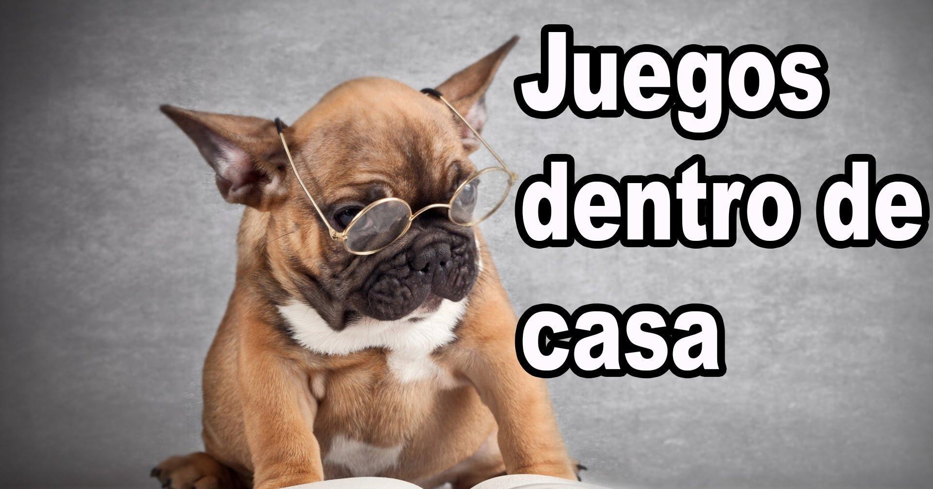 La Importancia Del Juego Para Los Perros Quieres Ver Algunos Ejemplos Juegos Perros Perros Bulldogs Franceses