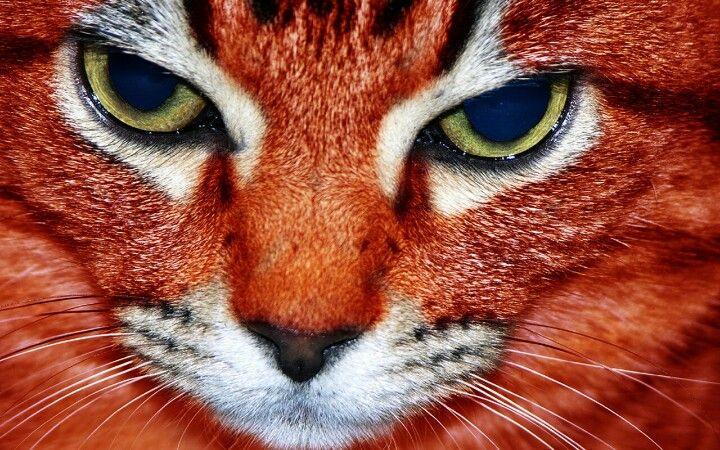 Auburn Tigers Live Wallpapers