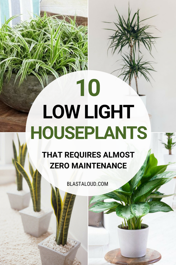 10 Low Light Houseplants You Won't Be Able To Kill #plantsindoor