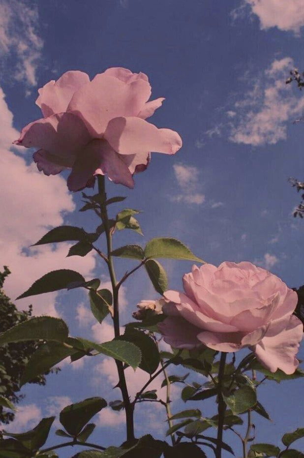 aesthetic sky flowers nature background