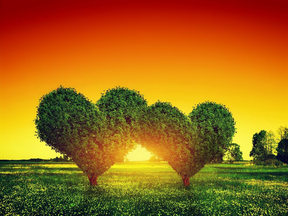 Heart Shape Trees Couple On Green Grass Field Landscape At Sunset Love Symbol Concept For Valentine S Day Wedding Etc Poster Landscape Walls Landscape Nature Posters