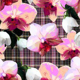 Bloom in Detail: Orchids on Tartan