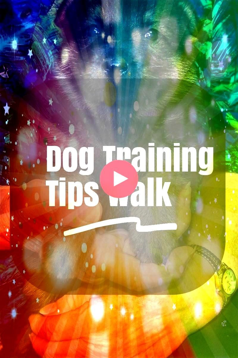 Dog Training Tips Walks Suggestions For Owner  Want to know more   Learn A Few Dog Training Tips Walks Suggestions For Owner  Want to know more   Learn A Few Dog Training...
