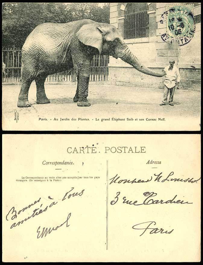 Elephant Saib Cornac Neff Touch Trunk Paris Jardin des Plantes 1905