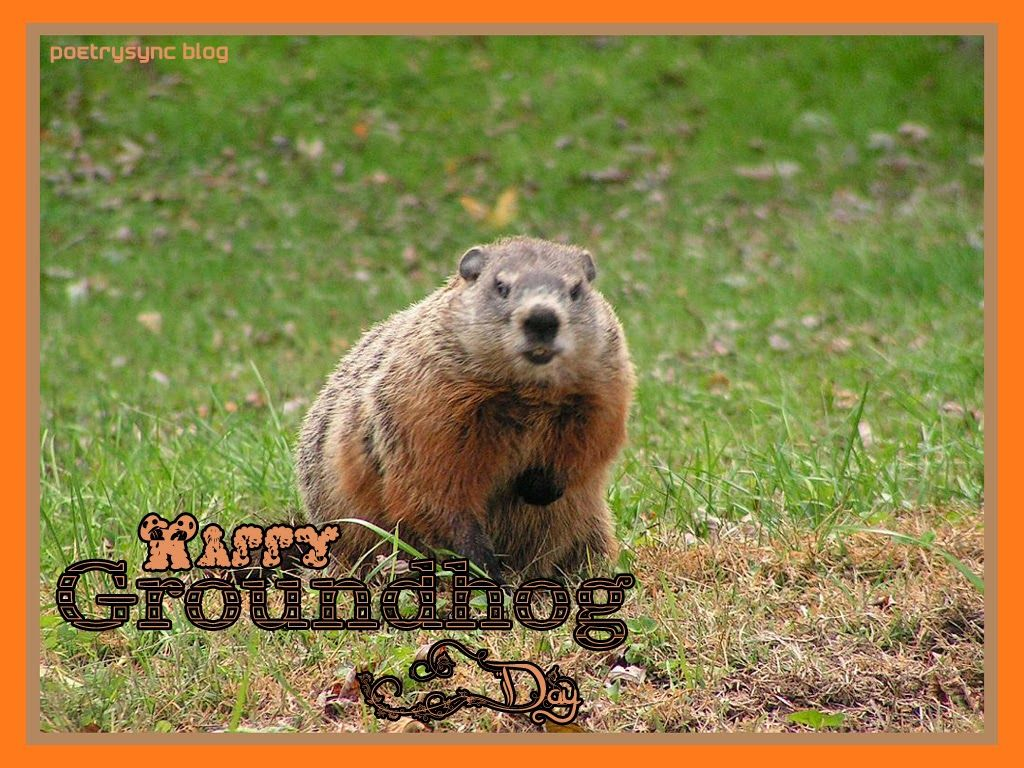 Poetry Happy Groundhog Day Quotes And Wishes Picture Cards Happy Groundhog Day Groundhog Day Groundhog