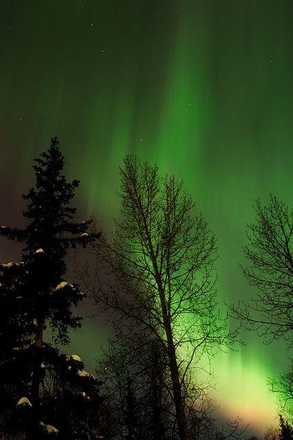 pinterest.com/fra411 #aurora #borealis - Aurora Borealis - Alaska. Je veux aller en alaska, juste pour voir ça