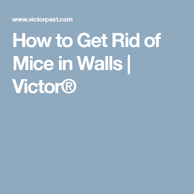 How To Get Rid Of Mice In Walls Victor Getting Rid Of Mice How To Get Rid Rid