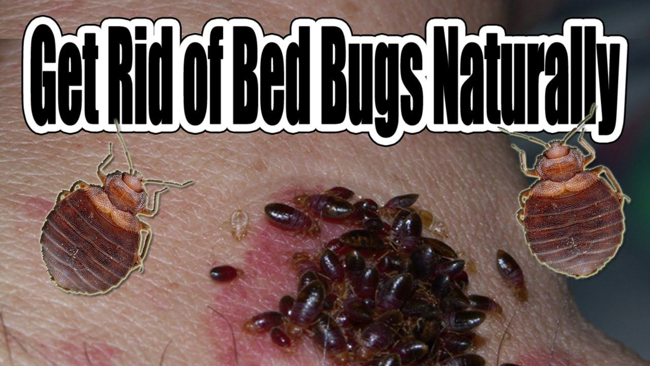 Pin By Victoria Hodge On My Videos Pinterest Bed Bugs Bugs And