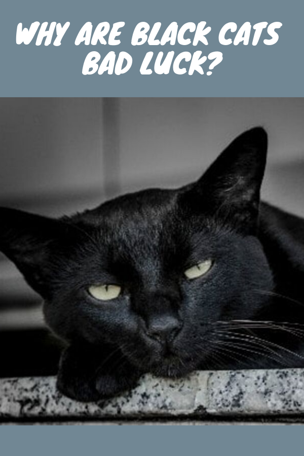 Why Are Black Cats Bad Luck? Cute cat names, Black cat