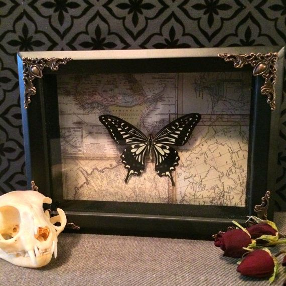 Decorative Shadow Boxes Entrancing Real Chinese Yellow Swallowtail Butterfly Shadow Box Taxidermy Inspiration