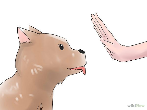 Teach Your Dog Basic Commands Dog Clicker Training Dog Training