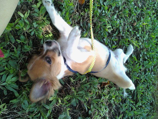 Come hang out with me! Check out pet friendly places in Bangkok.