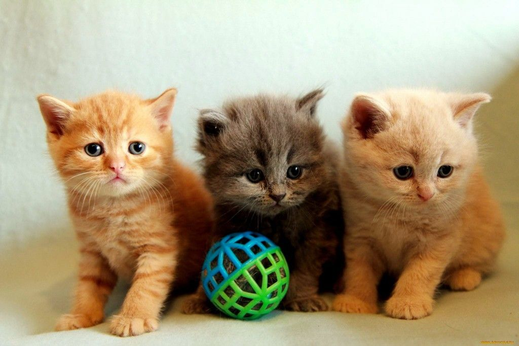 Cats Kittens Playing Adorable Cats Friends Fluffy Ball Cute Sweet Animals Kitties Photo Wallpapers Kittens Cutest Cute Kitten Gif Kittens Playing