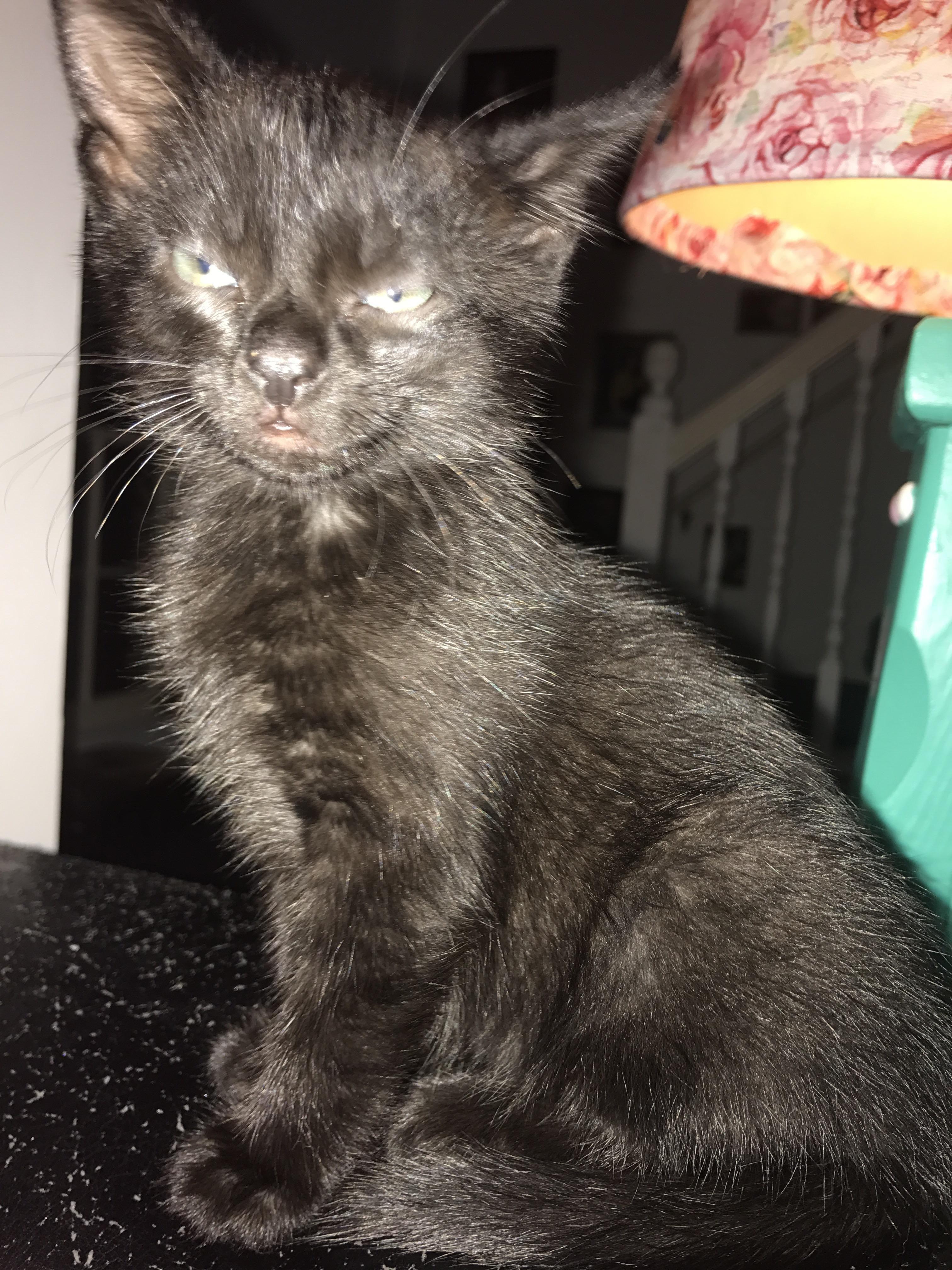 Accidental flash on kitty not impressed. http://ift.tt/2rsfUJI