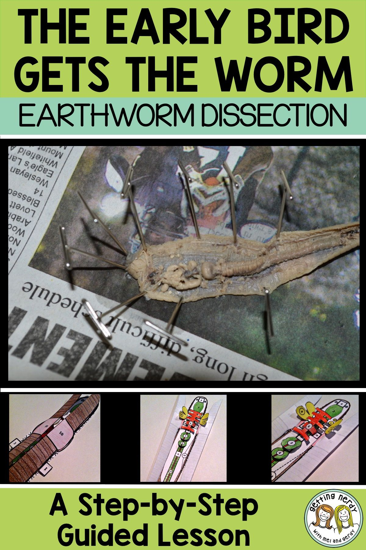 Lesson Plan Earthworm Dissection