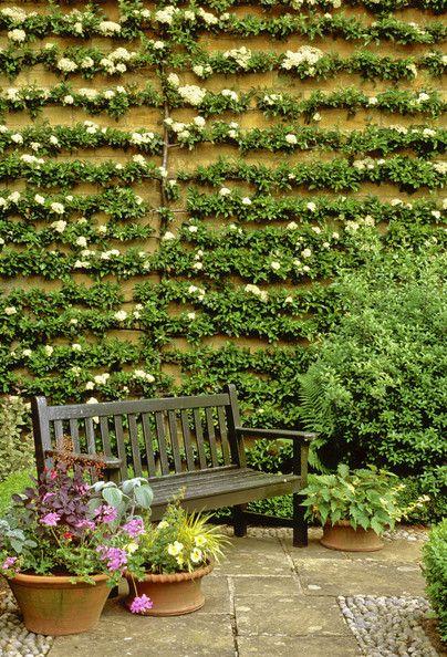 Wall of espalier... absolutely FABULOUS!!! | Gardening | Pinterest ...