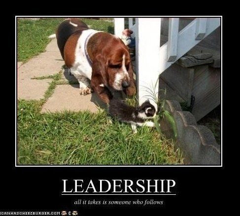 Funny Leadership Quotes Funny Leadership Quote  Leadership Quotes  Animals  Pinterest