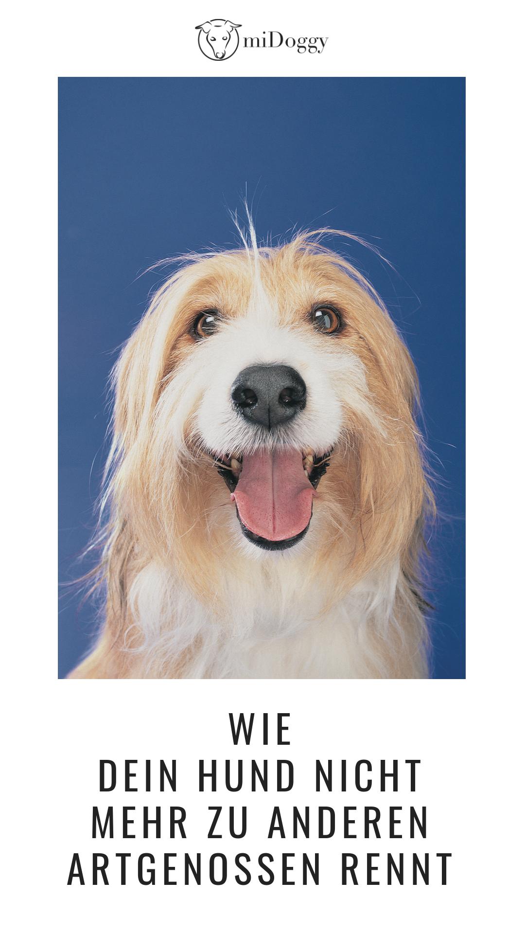 So Rennt Dein Hund Nicht Zu Anderen Midoggy Community Hunde Hundchen Training Hundetraining