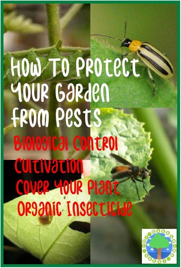 Safe and Effective Ways of Natural Pest Control Natural
