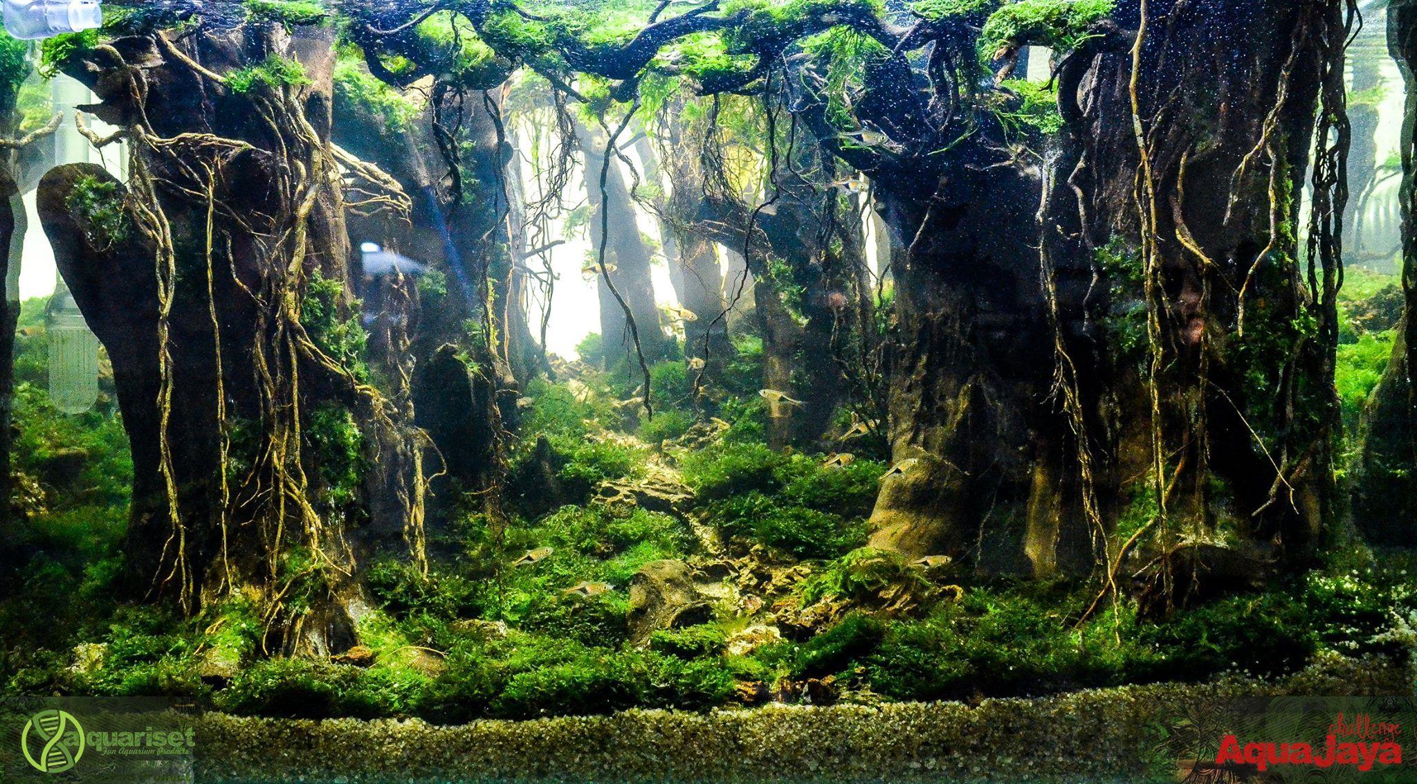 100 Aquascape Ideas | Live aquarium plants, Aquascape ...