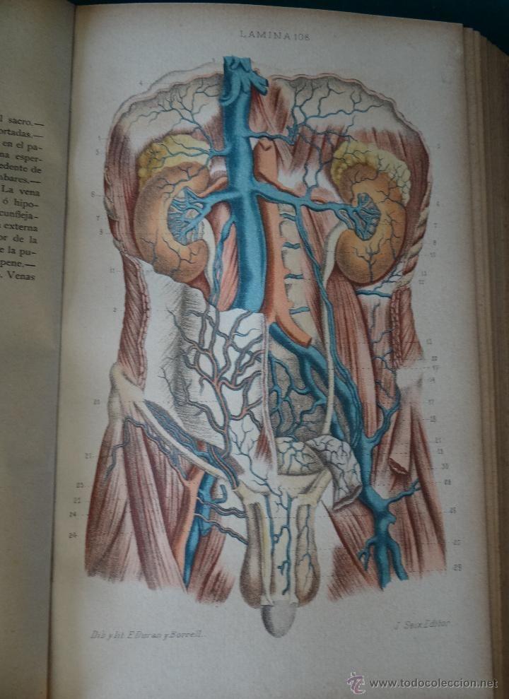 Libros antiguos: - Foto 6 - 49356760 | Anatomy | Pinterest ...