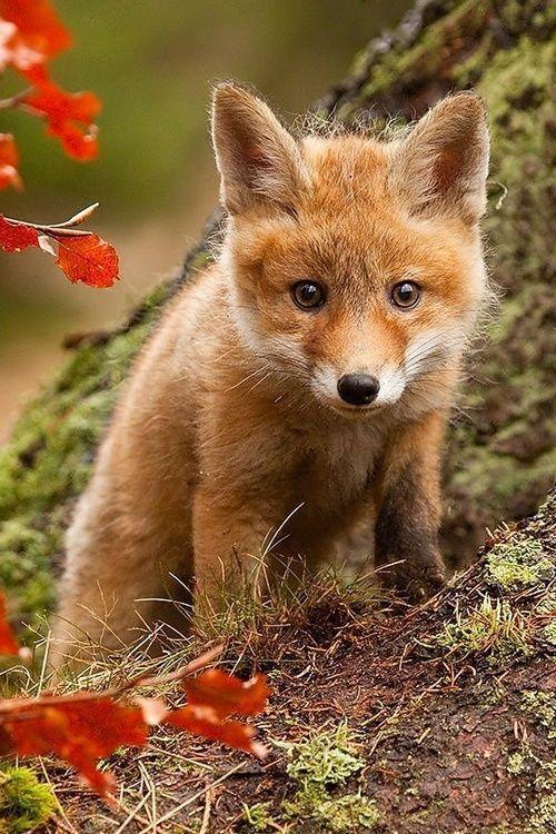 SEI(AtelierSEI)さん Twitterがいいねしたツイート 可愛すぎる動物, かわいい動物の