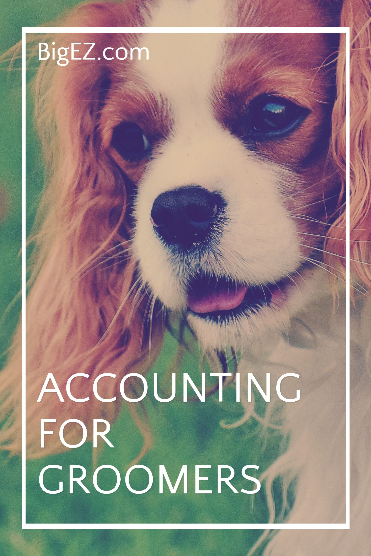 Dog Grooming Setup Bookkeeping Software For Dog Grooming