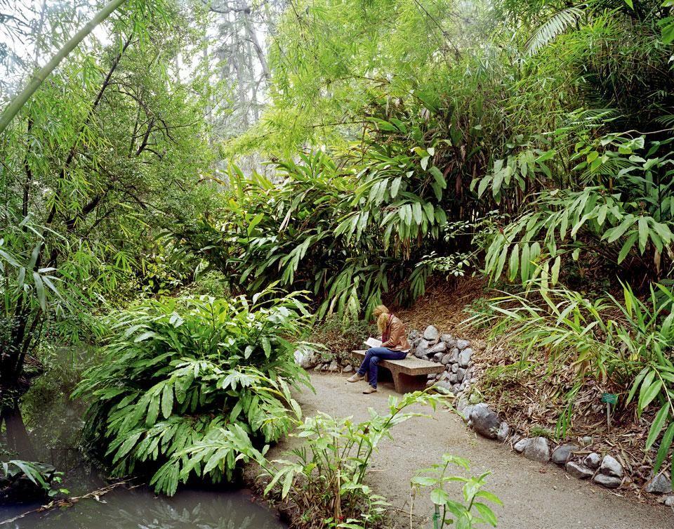 Exceptionnel UCLA Mildred E. Mathias Botanical Garden