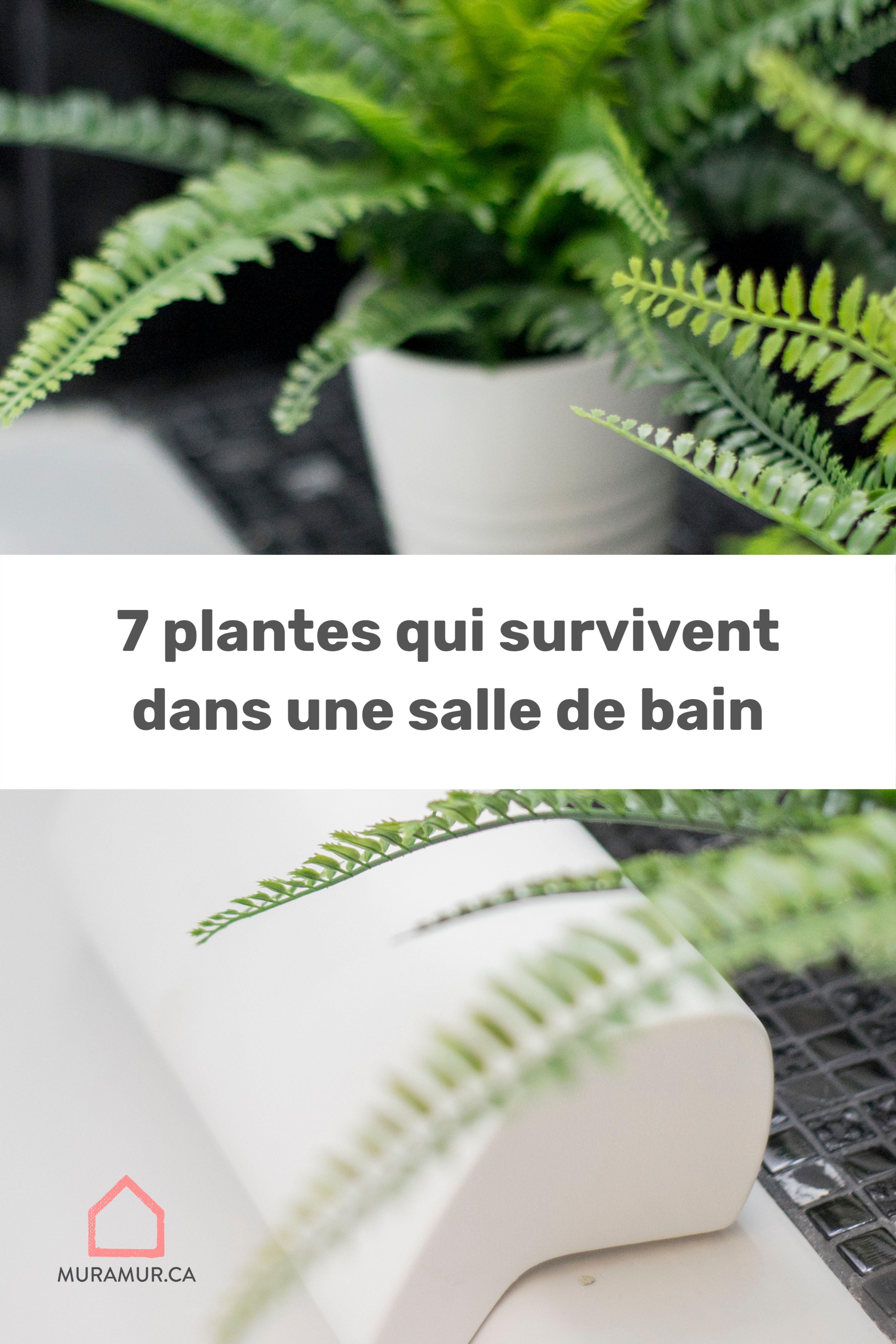 Plante Pour Salle De Bain Sombre 7 plantes qui survivent dans la salle de bain avec peu de