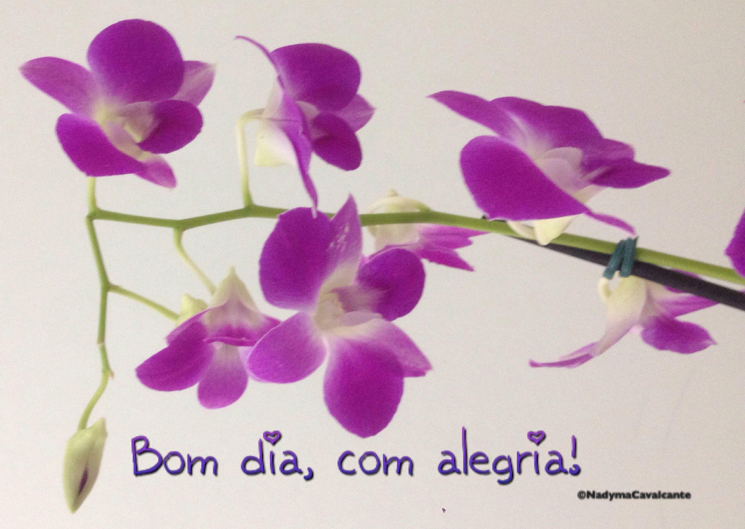 Bom dia, com alegria no coração, fé na vida e esforço para ser um pouco melhor, a cada dia!
