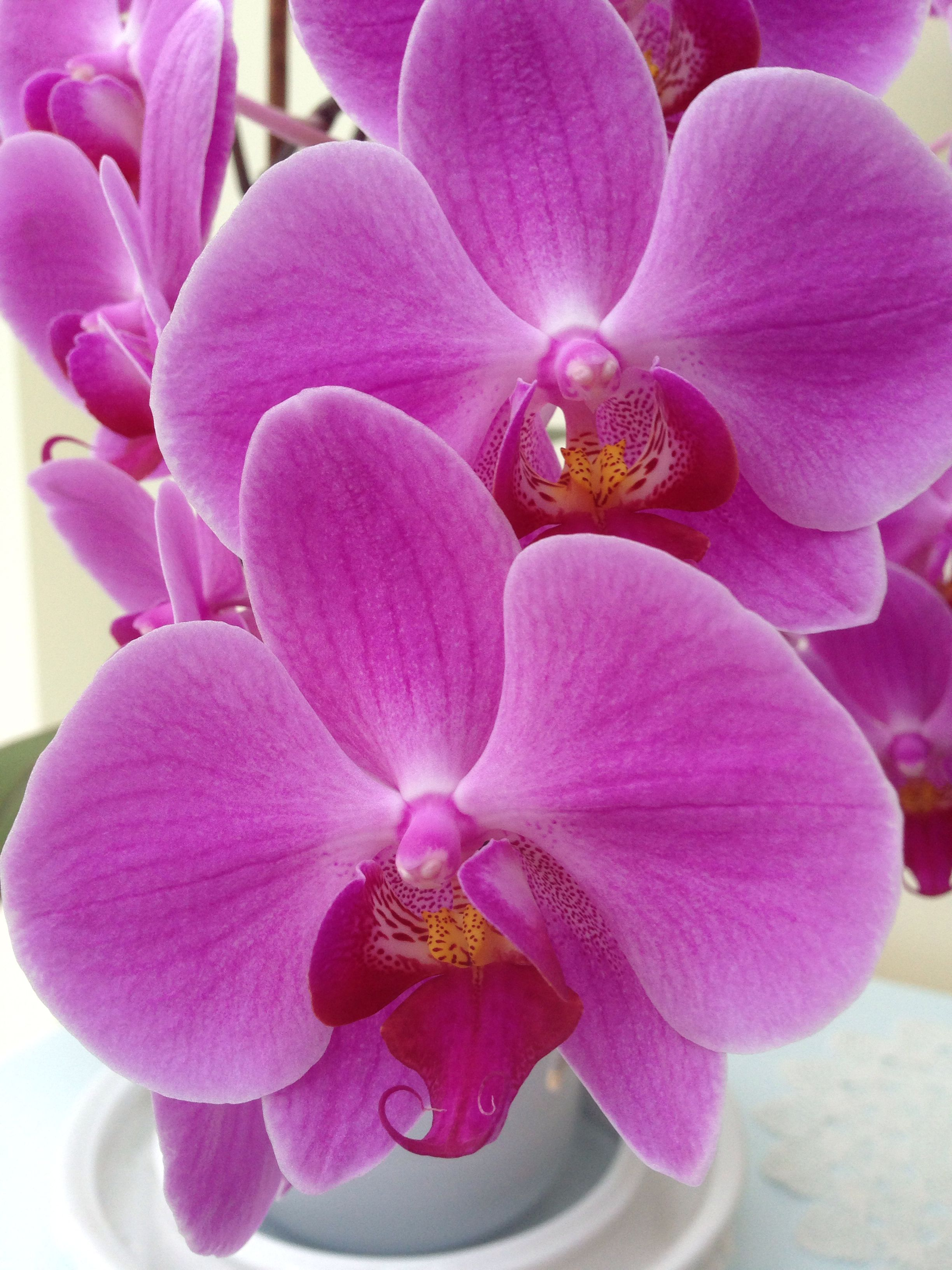 Beautiful orchid pinterest flowers beautiful orchid izmirmasajfo