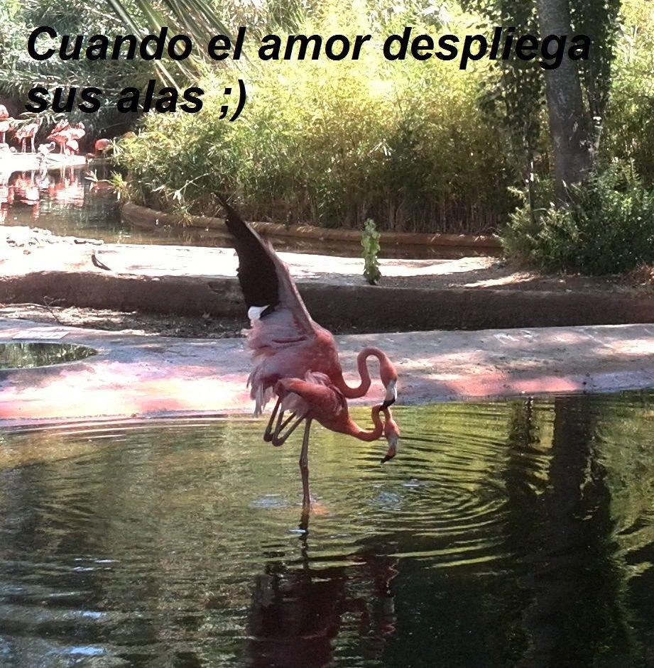 Cuendo el amor despliega sus alas...te enseñará a volar