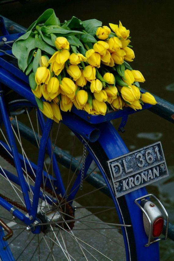 Tulip bike  8x12 photograph by SarkaTrager on Etsy, $30.00