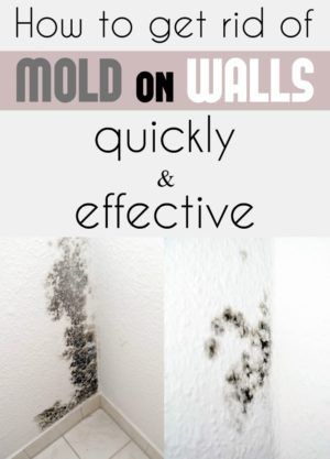 How To Get Rid Of The Mold In The House