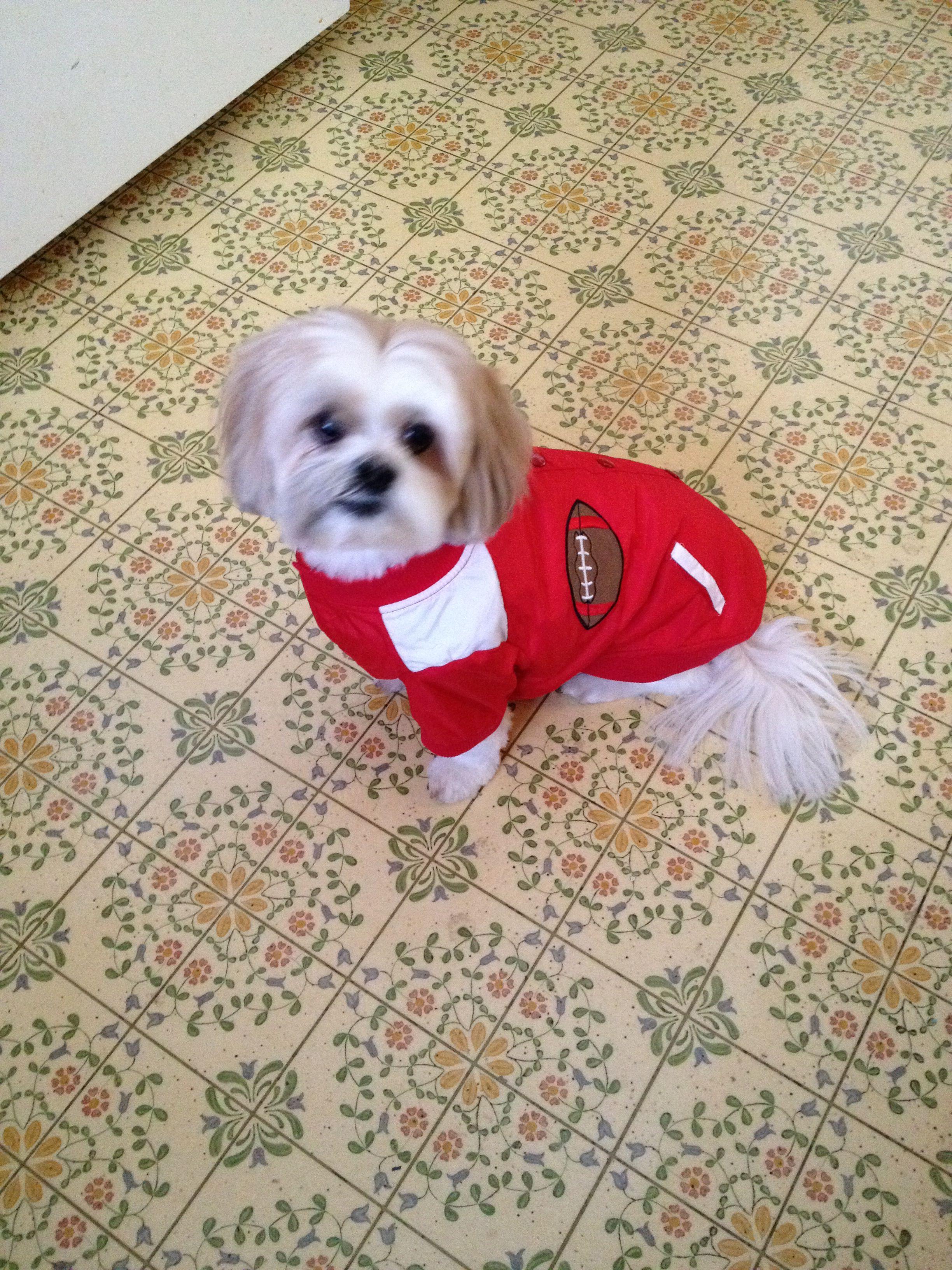 LayLa wearing her 49'er jacket Layla, Animals, Football
