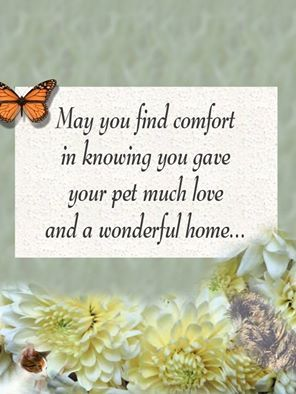 May You Find Comfort In Knowing You Gave Your Pet Much Love And