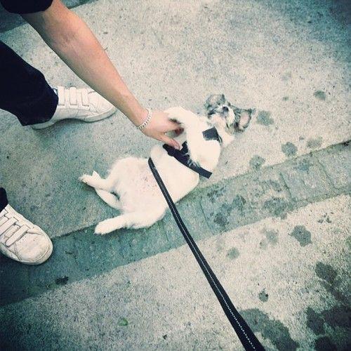 heididahlsveen:  This #atsjoo loves #puppy #valp #hund #dog