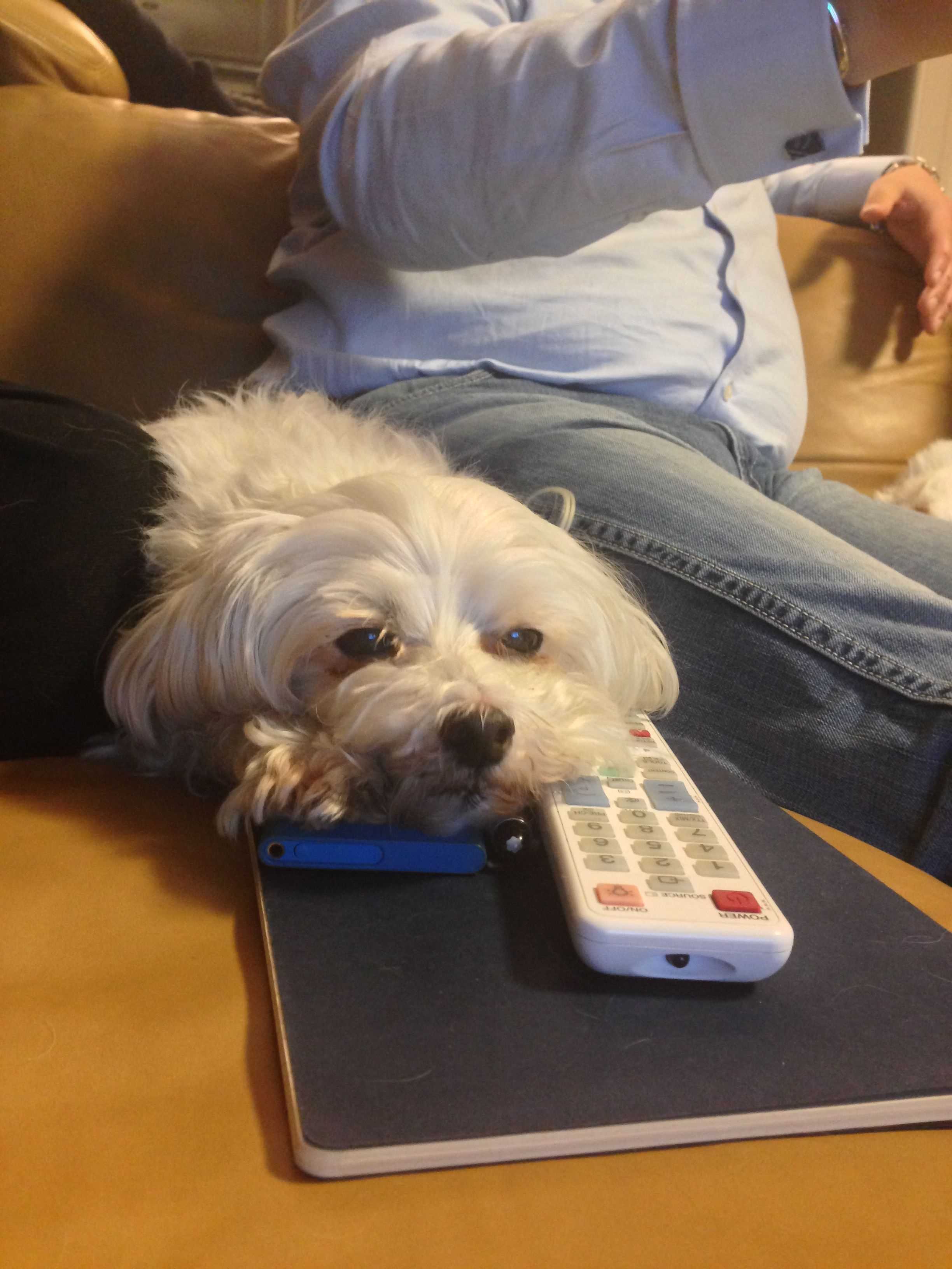 86bff81399c My little tv maniac  ) King Charles