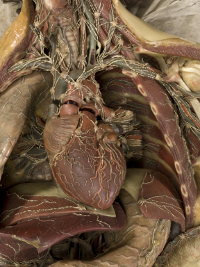 Wax anatomical model of a female showing internal organs, Florence, Italy, 1818 | Credits: Science Museum, London