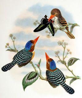 Винтажные птички | Старинные птицы, Фотографии птиц ...