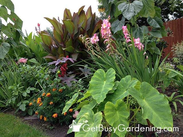 My Tropical Garden In Minnesota Tropical Landscaping