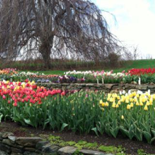 Spring at white flower farm morris ct worth a trip close to spring at white flower farm morris ct worth a trip mightylinksfo