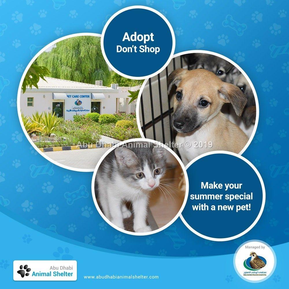 Abu Dhabi Animal Shelter Animal Shelter Dog List Dog Show