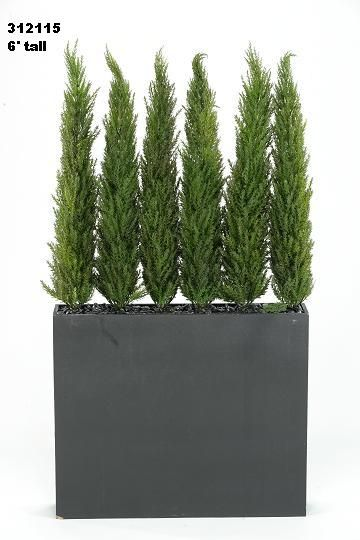 Tall planter tall plants gift ideas pinterest see for Tall planters for privacy