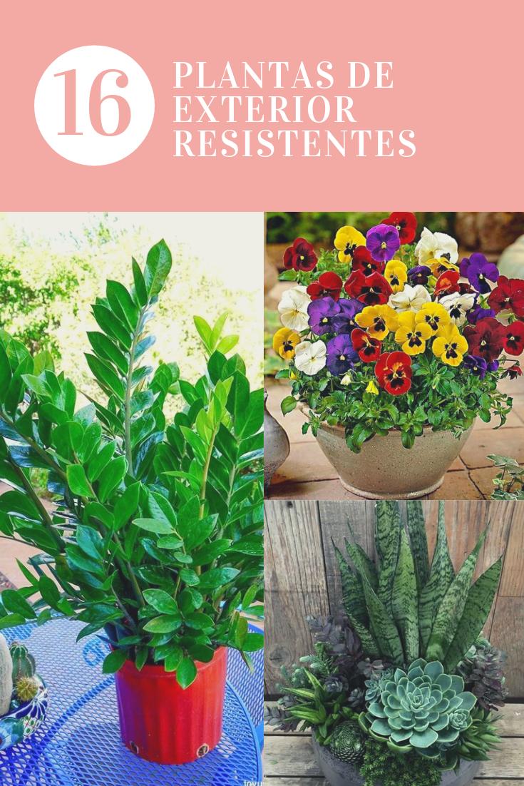 37+ Plantas resistentes al sol para terrazas inspirations