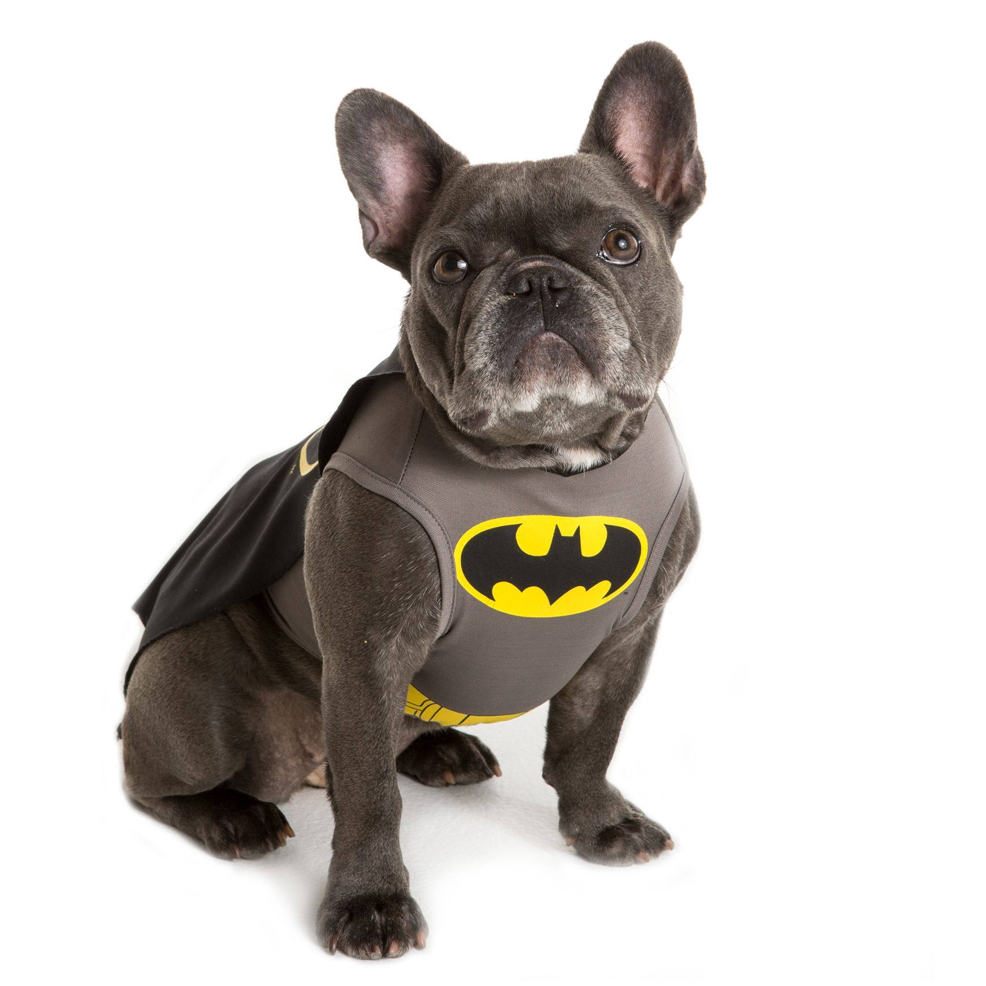 Halloween Pets Costumes Toys Treats More At Petsmart Batman Dog Costume Pet Costumes Dog Halloween