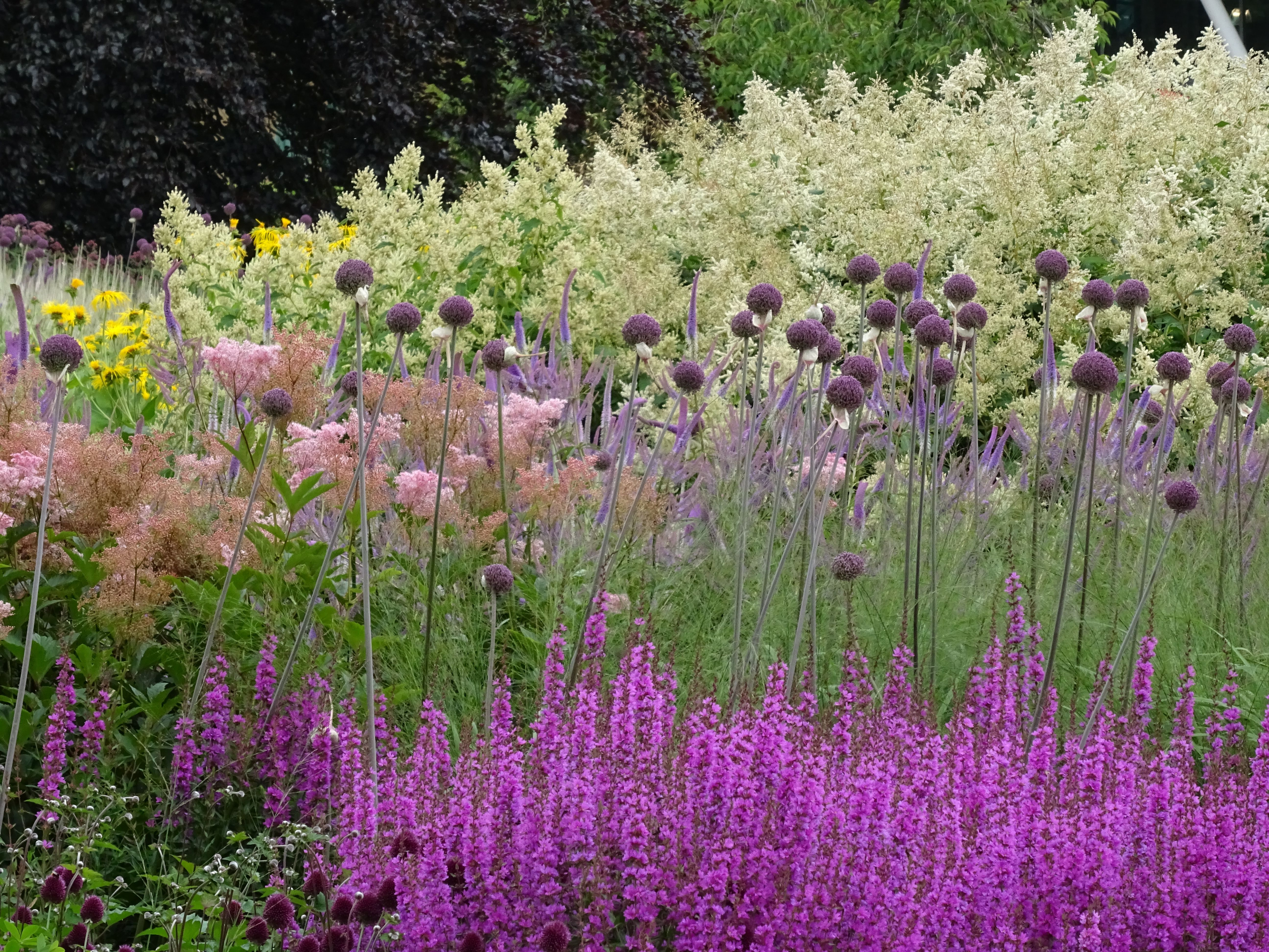 Floral labyrinth trentham in july beautiful gardens