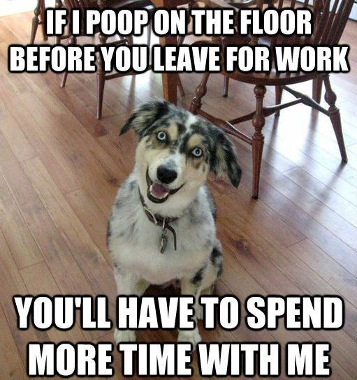Overly Attached Dog Memes Funny Animals Funny Dog Pictures Dogs Pooping